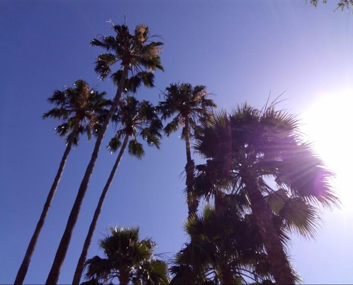 Palms in front of Le Pain Quotidien Melrose, LA, CA