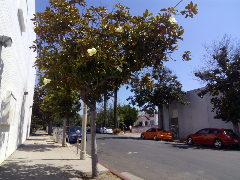 Melrose Avenue, LA, CA in June 2017